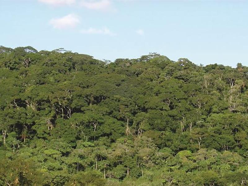 Duratex é referência no manejo sustentável de florestas
